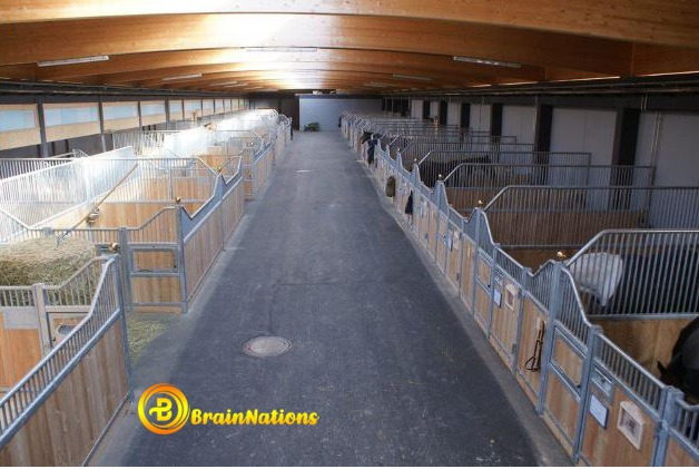 the trading stables